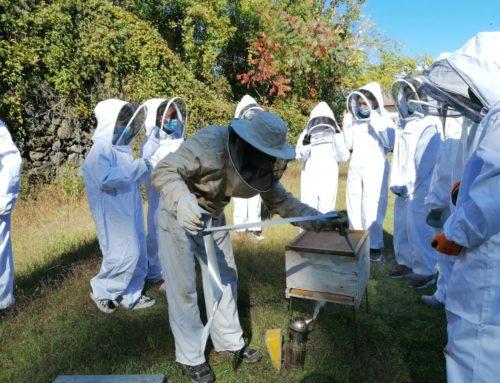 Els alumnes de segon d'ESO s'endinsen en el món de l'apicultura